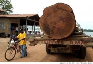 deforestation00