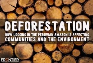 deforestation10