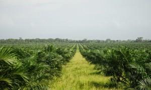 deforestation15