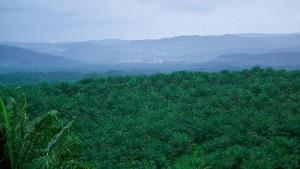 deforestation16