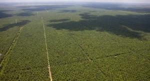 deforestation17
