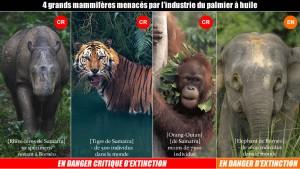 deforestation19