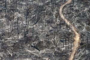 deforestation5