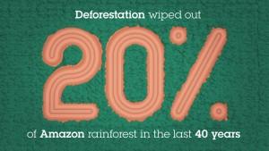 deforestation8