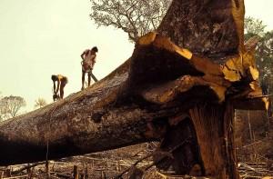deforestation9