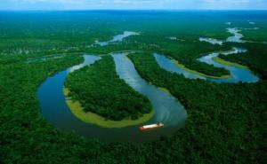 rainforest00