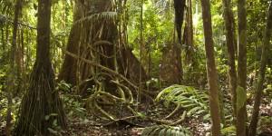 Amazon Rainforest near Tambopata River.