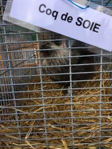 Samedi après midi visite de la ferme LES VOLAILES D'ARMOR 7