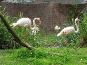 sortie zoo 058