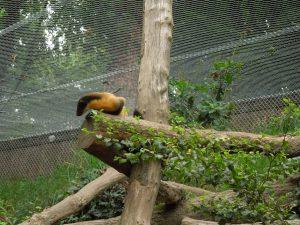 sortie zoo 075
